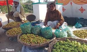 As sweet as the berries of Khanpur