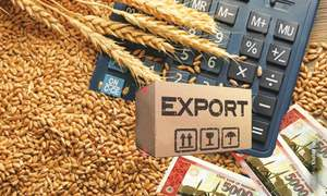 Revisiting wheat production and export policy