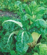 GARDENING: THE GREENS THAT YOU MUST GROW