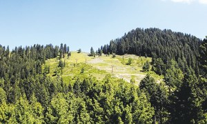 Cutting down trees for CPEC