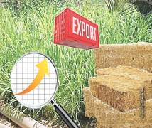 Consequences of fodder exports