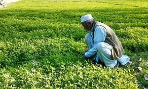 Farmers' budget demands