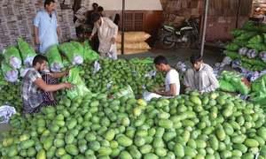 Sindh growers start mango exports, fetching better deals