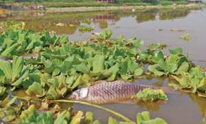 Dead fish spark fears of Rawal Lake 'contamination'