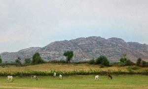 تھر میں بارش: صحرا میں بہار کا سماں