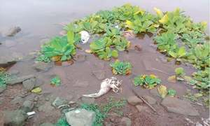 How the serenity of Rawal lake was killed off by those living around it