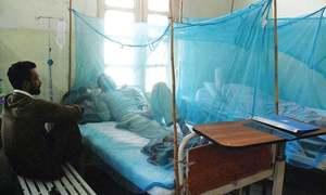 Two deaths by dengue fever set alarm bells ringing in Peshawar