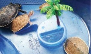 Protected freshwater turtles confiscated