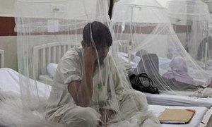 Dengue scare at Khyber Teaching Hospital as death toll reaches 50