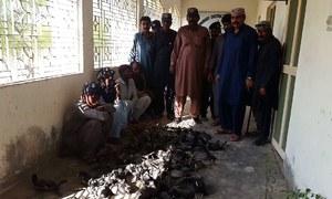 70 migratory birds retrieved, 4 poachers arrested in Badin: Wildlife department