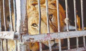 Three circus animals rescued, placed in zoo