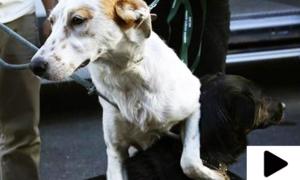 آوارہ کتوں کو سدھارنے کا منفرد طریقہ
