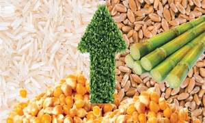 Sustaining production of key food crops