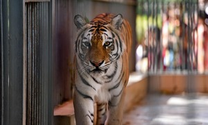 The plight of animals in captivity