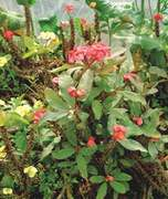 GARDENING: 'HOW CAN I REVIVE MY GRANNY'S NEGLECTED GARDEN?'