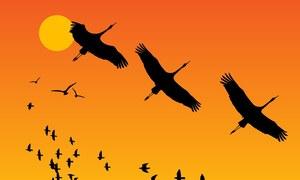 'مہمان' پرندوں کی پاکستان سے ناراضگی کی وجہ کیا بنی؟