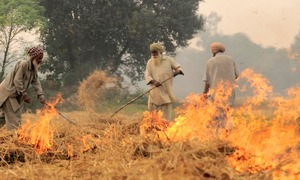 Watch: Farmers burn stubble in Indian Punjab despite the smog