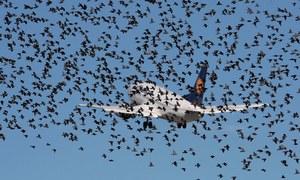 نازک پرندے کیا کچھ  کر سکتے ہیں؟