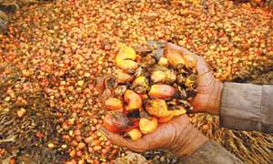 Punjab's unrealistic edible oil plans