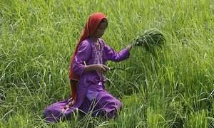 'پانی کی کمی اورموسمی تبدیلی زرعی زمینوں کو بجر کردیں گی'