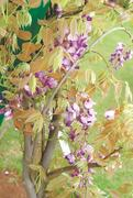 GARDENING: 'MY HAWTHORN TREE IS NOT FRUITING. WHAT SHOULD I DO?'