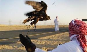 بحرین کے بادشاہ کو نایاب پرندے تلور کے شکار کی اجازت