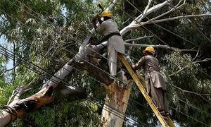Trees seen serving as electrical poles in Larkana village