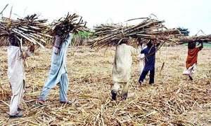 Deadlock between Sindh sugar millers, cane growers persists despite talks