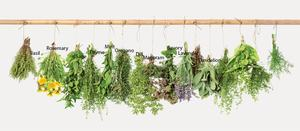 CUISINE: THE MAGIC OF HERBS