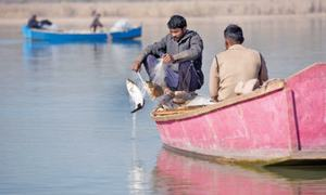 Commercial fishing returns to Rawal Lake