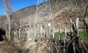 Walnut trees destroyed in Chitral by Wapda to make way for transmission line