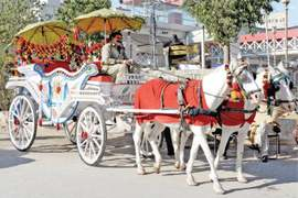 The return of the horse-drawn carriage