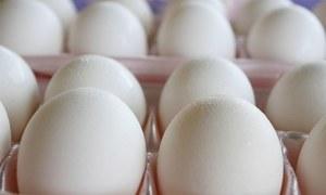 انڈے صحت کے لیے مضر یا فائدہ مند؟