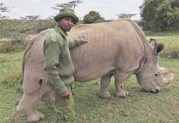 Last male northern white rhino dies aged 45