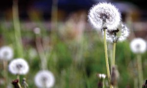 Pollen count in Islamabad hits nine-year high