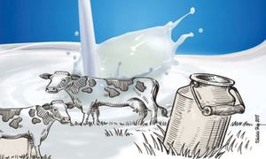 Reviving dairy sector