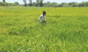 Kharif crop targets set amid irrigation water shortage
