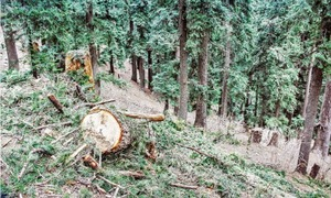 Illegal forest cutting alarms Swatis