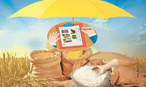 Challenges in implementing food security policy