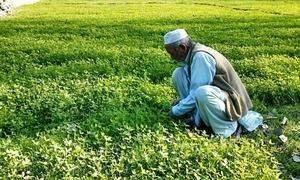 FAO, Pakistan working on new agri-policy