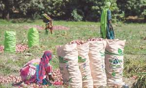 The myriad problems of  agriculture sector