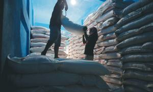 Global sugar prices plunge to multi-year lows on excess supplies