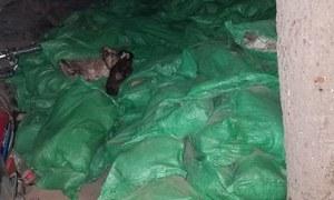 کراچی: گدھوں اور کتوں کی 800 سے زائد کھالیں برآمد، 2 ملزمان گرفتار