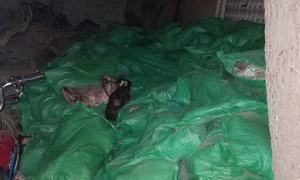 Duo caught with more than 800 dog, donkey hides in Karachi out on bail within 24 hours
