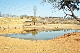 Rs7.7bn theme and safari park project ignores animal welfare
