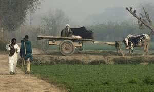 برتر اور کمتر کیوں اور کیسے؟ پنجاب میں ذات برادری کا تاریخی پس منظر