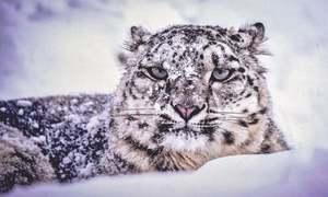 Wildlife photography show opens