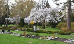 ڈنمارک کے قبرستان میں پھولوں سے رومانس