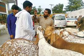 Customers lament high prices of sacrificial animals