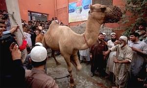 عید الاضحٰی اور ہمارا اجتماعی رویہ